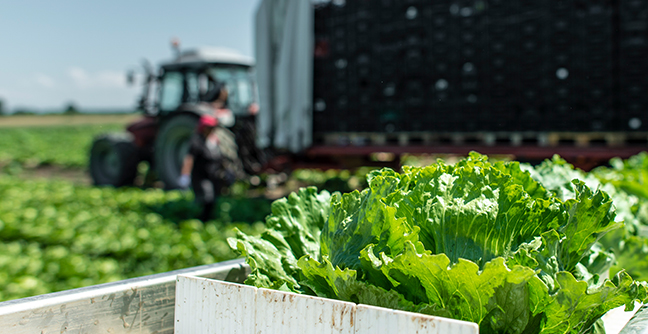"PacLease Location Spotlight - Spec'ing for Ag in the ""Salad Bowl of the World"""